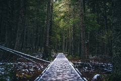 Icy forest path. Image of an icy forest path royalty free stock photos