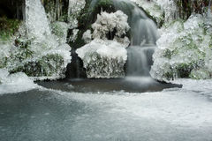 Icy forest pond  Stock Photos