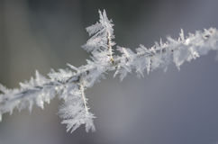 Icy Frost Crystals Clinging to the Frozen Winter Foliage Royalty Free Stock Photography