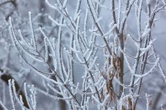 Icy Frosted Branches. Frozen, icy branches of a tree stock photo