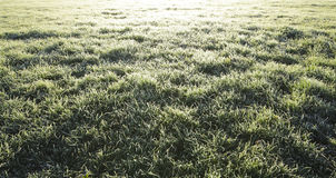 Icy grass Royalty Free Stock Image