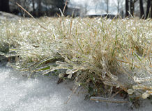 Icy Grass Royalty Free Stock Photo