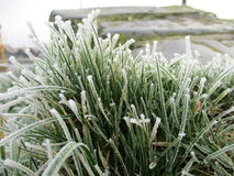 Icy grass Royalty Free Stock Photography