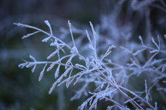 Icy grass Royalty Free Stock Photos