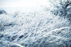 Icy grass Stock Image