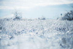 Icy grass Stock Photography