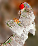 Icy hip. In autumn after ice rain Stock Photo