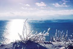 Icy icicles of grass on a cliff on the beach. stock photography