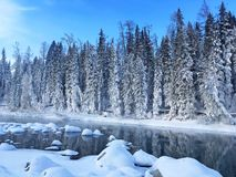 Free Icy Kanas Forest In Winter Royalty Free Stock Photo - 109334475