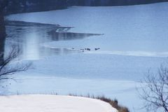 Icy Lake with Geese stock image