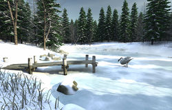 Icy Lake With Swan Stock Image
