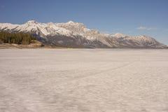 Mountain and Abraham Lake Landscape royalty free stock photos