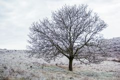 Icy landscape with tree in winter, grass covered with ice crust Stock Image