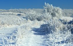 Icy landscape Royalty Free Stock Photography