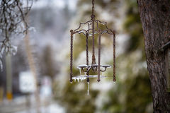 Icy Lantern. On a tree Stock Photography