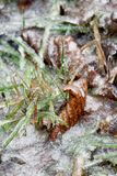 Icy leaves and blades of grass stock images