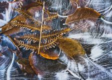 icy leaves royaltyfri foto