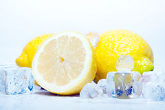 Icy Lemons!. Icy wet Lemons and Ice Cubes placed on blue Stock Photos