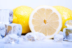 Icy Lemons! Royalty Free Stock Image
