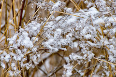 Icy meadow in the winter Stock Photo