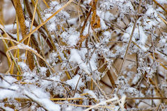 Icy meadow in the winter Stock Photos