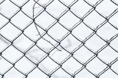 Icy mesh-netting in winter day. Background of the iced mesh-netting on a frosty winter day stock photos