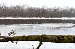 Icy Mississippi River and Fallen Tree in Park Royalty Free Stock Image