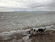 Icy Mountain Bay with dogs Royalty Free Stock Image