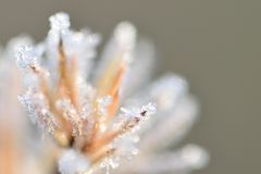 Icy needles Stock Photography