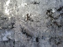 Icy patterns on the winter glass. Fabulous patterns. royalty free stock image