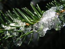 Icy pine Stock Photos