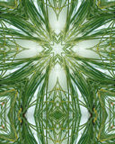 Icy pine needle cross 6 Stock Images