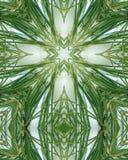Icy pine needle cross 6 Stock Images