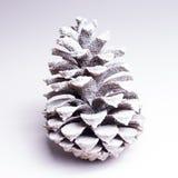 Icy pinecone Stock Image