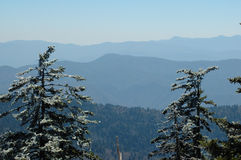 Icy Pines GSMNP. Ice covered pine trees at Clingman's Dome in the Great Smoky Mountains National Park Royalty Free Stock Photos
