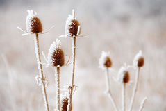 Icy plants Stock Photography