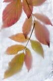 Icy plants Stock Image