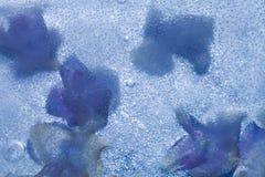 Icy plants Stock Photo