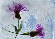 Icy plants Stock Photos