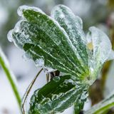 Icy rain in autumn Stock Photography