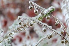 Icy rain in autumn Stock Photo