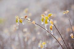 Icy rain Stock Images