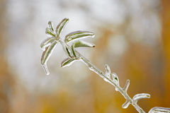 Icy rain Royalty Free Stock Photography