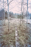 Icy rural landscape with trees and land. retro vintage polaroid Royalty Free Stock Images