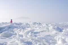 Icy sea in the far north. Lonely dog on ice Stock Photos