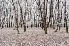 icy skog Royaltyfri Foto