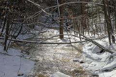 Icy snow covered creek. Branches falling over a snow covered and icy creek Royalty Free Stock Images