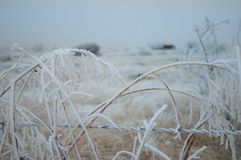 Icy Snow Covered Field. A wintery mix of snow and ice covering a west Texas desert field Royalty Free Stock Photography