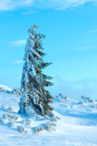 Icy snowy fir tree. Stock Photography