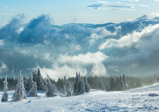Icy snowy fir trees on winter hill. Stock Image